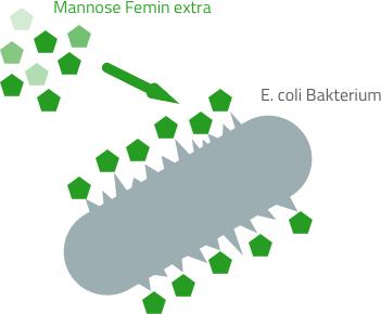 D-Mannose Wirkung